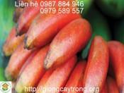 Cây giống chuối đỏ Đăc Ca