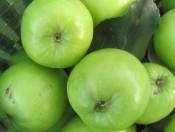 Cây giống táo T5
