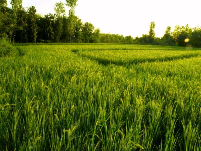 ánh sáng ảnh hưởng thế nào tới cây trồng