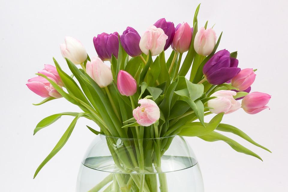hoa tulip trong binh nuoc