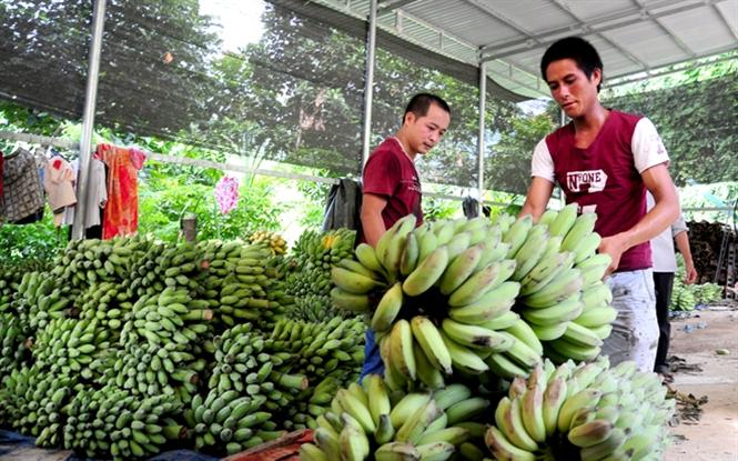 Thoát nghèo, giàu lên nhờ nông nghiệp theo hướng sản xuất hàng hóa lớn